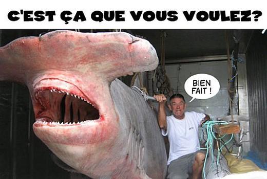 Soutenez les ditions requins marteaux en vous faisant for Comment dessiner un requin marteau